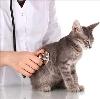 Ветеринарные клиники в Кирсанове